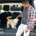 Dog Car Safety Tips to Protect Your Precious Pooch