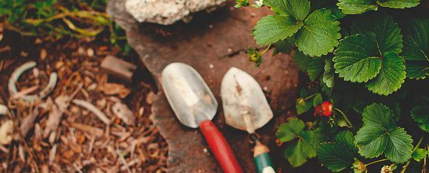 xeriscaping gardening
