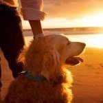 5 Essential Tips to Keeping Your Pet Healthy This Summer