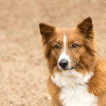 Dog Breeds That Can Ruff it in the Cold