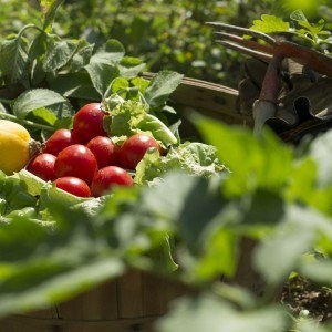 Fruit & Vegetable Garden