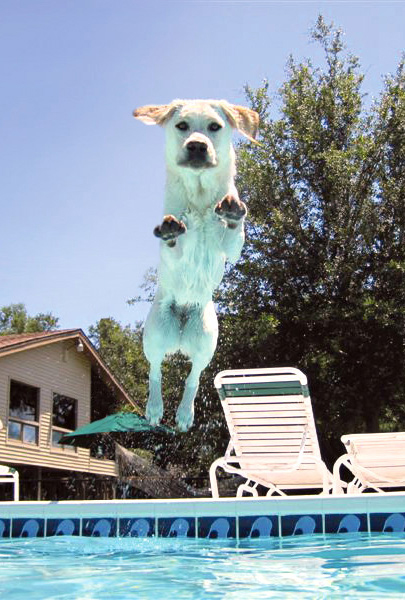 Nationwide insured pet Shayna enjoys a leap into the family pool.