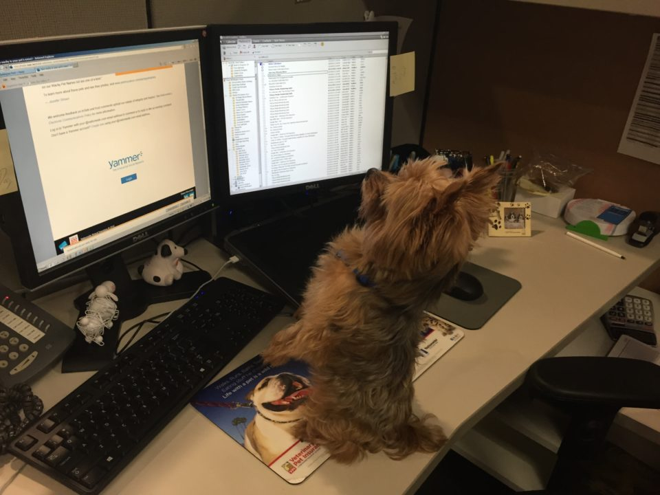 Nationwide Pet Insurance Offered As Employee Benefit