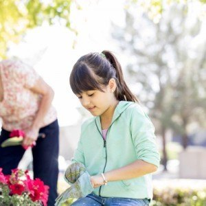 How to protect your garden