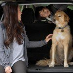 How to Dog Proof Your Car for Travels with Your Four-Legged Friend