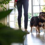 How to Prevent Dog Bites