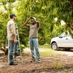 5 Tree Care Tips to Protect Your Property