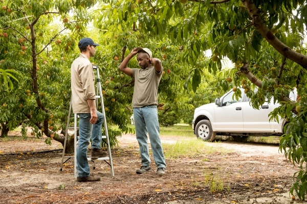 two men in work clothes, surrounded by trees