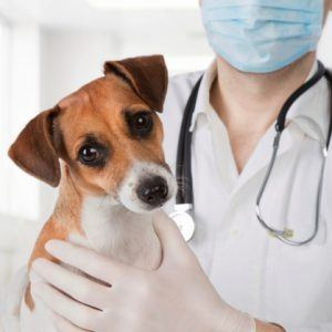 Reasons to take pets to the vetReasons to take pets to the vet