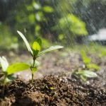 4 Tips to Help Improve Soil Fertility