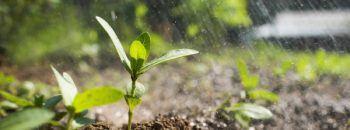 how to make soil fertile