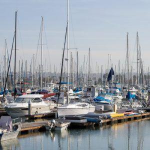 Several sailboats in dock slips