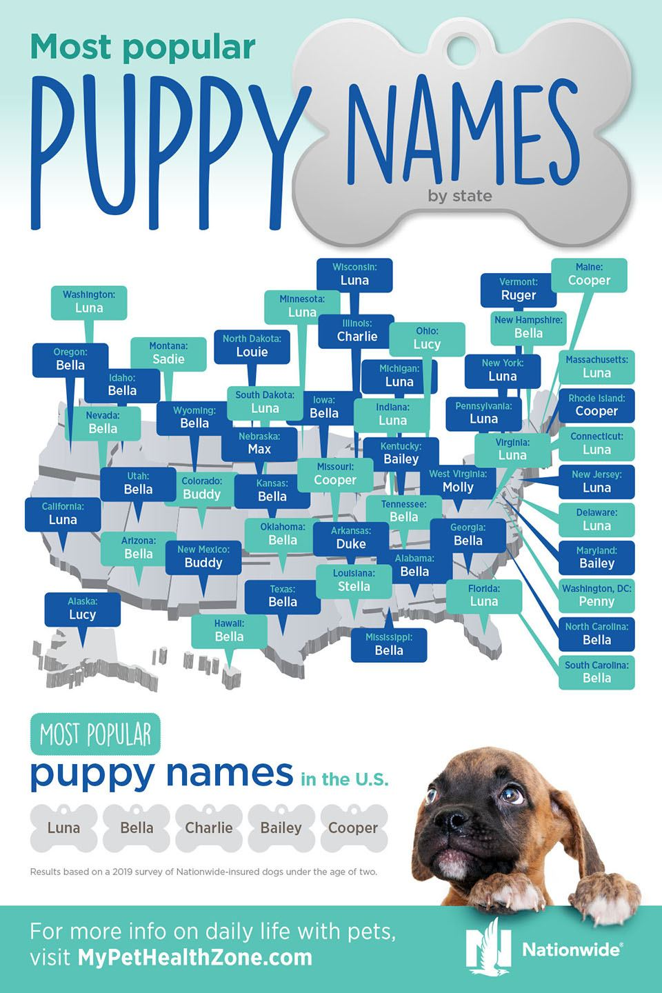 most popular puppy names infographic