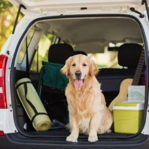 dog in back of van with hatch open