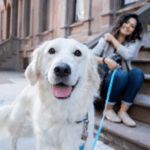 How to Make a Disaster Plan for Pets