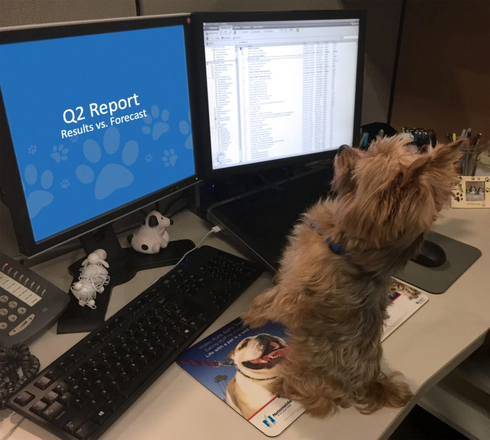 small dog looking at a computer screen