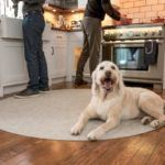 Can Dogs Eat Turkey? Pet Safety Tips for Thanksgiving Dinner