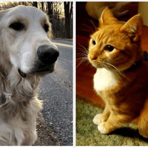photo of a dog and a cat
