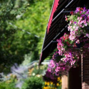 flowers hanging off roof