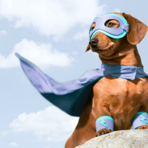 a dog wearing a superhero costume