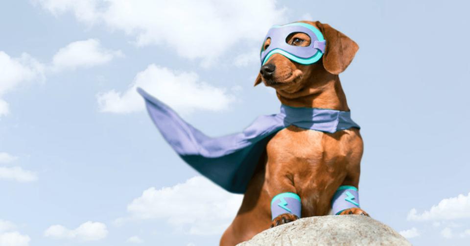 a dog wearing a superhero costume