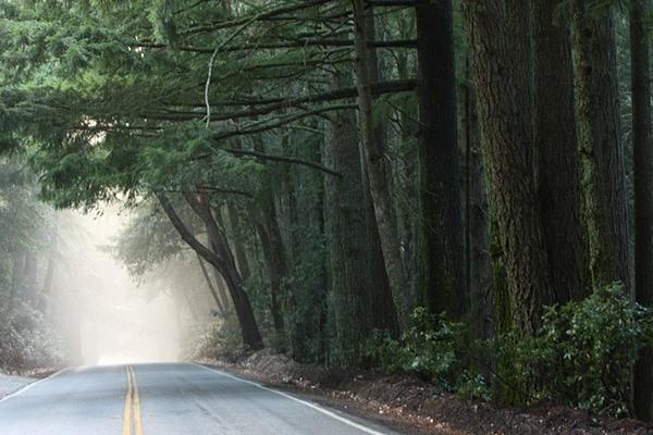 fog on a road