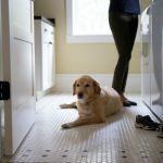 8 Washing Machine Maintenance Tips