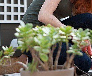 a woman planting a garden